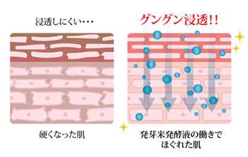 発芽米発酵液のほぐす力